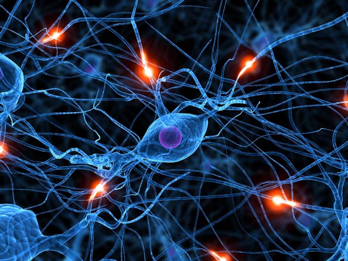 """Per il cervello imparare è creare nuove connessioni. Il """"connettoma"""" e  la Formazione"""