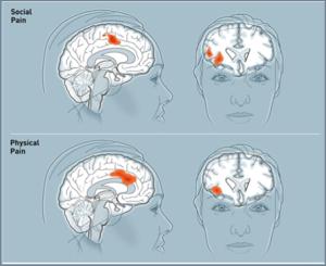aree attivate nel cervello da diversi comportamenti